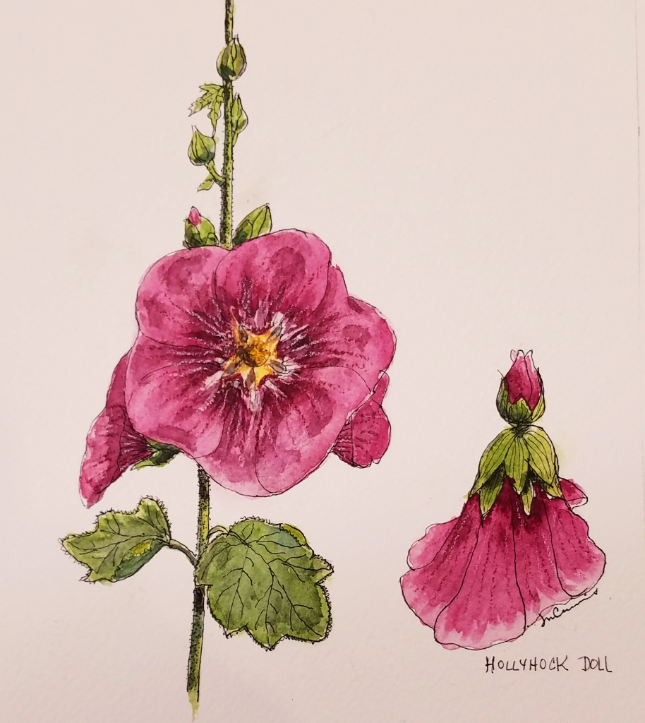 Hollyhock detail