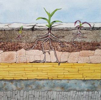 Illustration of layers of soil compaction in a newly planted corn field, for article I wrote: https://myfarmlife.com/crop-care/a-deep-dive-into-soil-compaction/